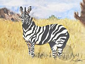 Zebra in an Open Field