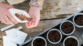 Appel aux dons de graines et d'outils pour les ateliers jardin du Secteur Famille