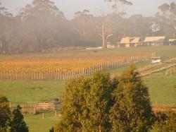 Gosling Creek Winery