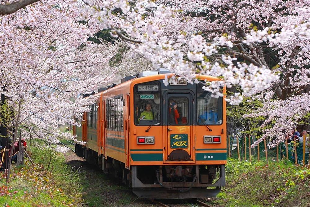 In Giappone il viaggio in treno tra neve e fiori.
