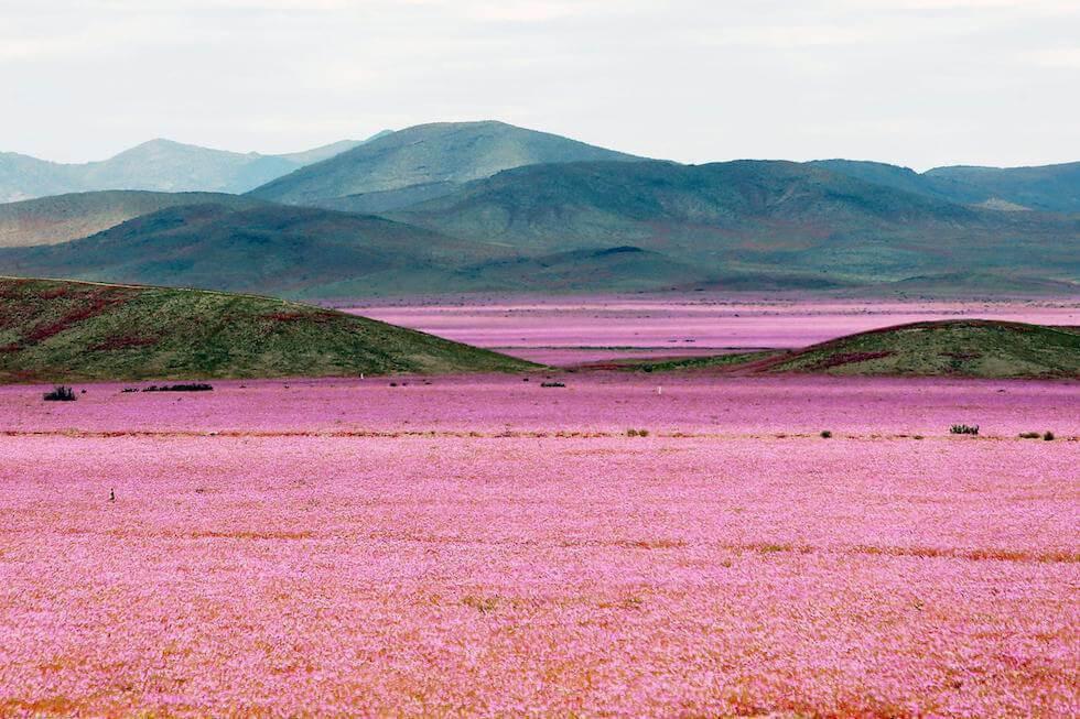 Giardino di Atacama