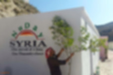 Syrian man planting a tree