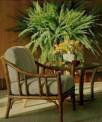 Novelty Cane Art Chair With Cushion: SS50TAJ1