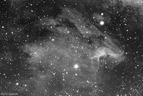IC5070 - The Pelican Nebula