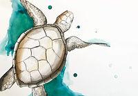 kayleigh mccallum art sea turtle paintin