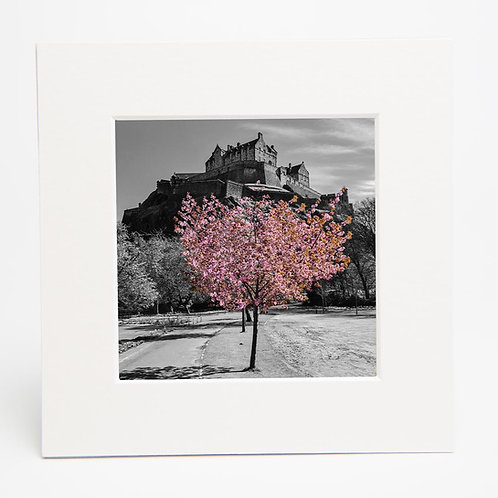 Blossom under the Castle Print