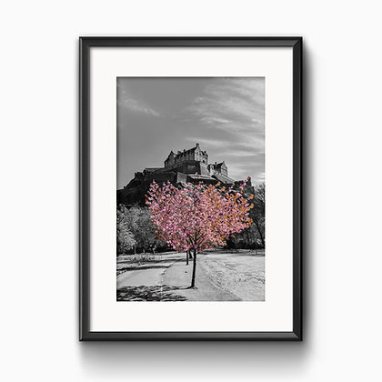 Edinburgh Castle Blossom Print