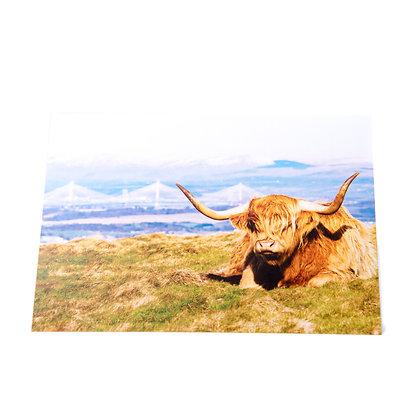 Highland Cow Card