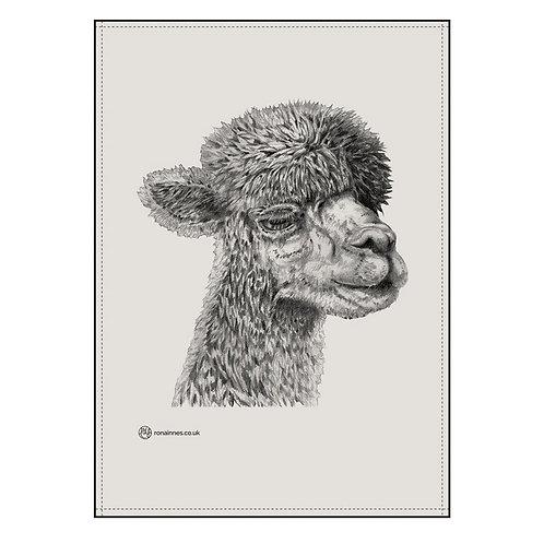 Alpaca tea towel based on an original pencil drawing