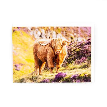 Scottish Highland Cow card by Ryan McEwan Photography