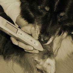 Isabel Fiala Laser Hund.jpg