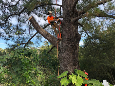 Tree Management Over Time