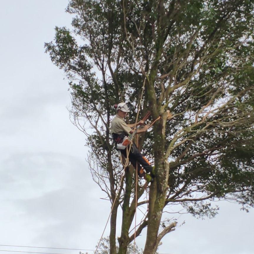 tree maleny hinterland
