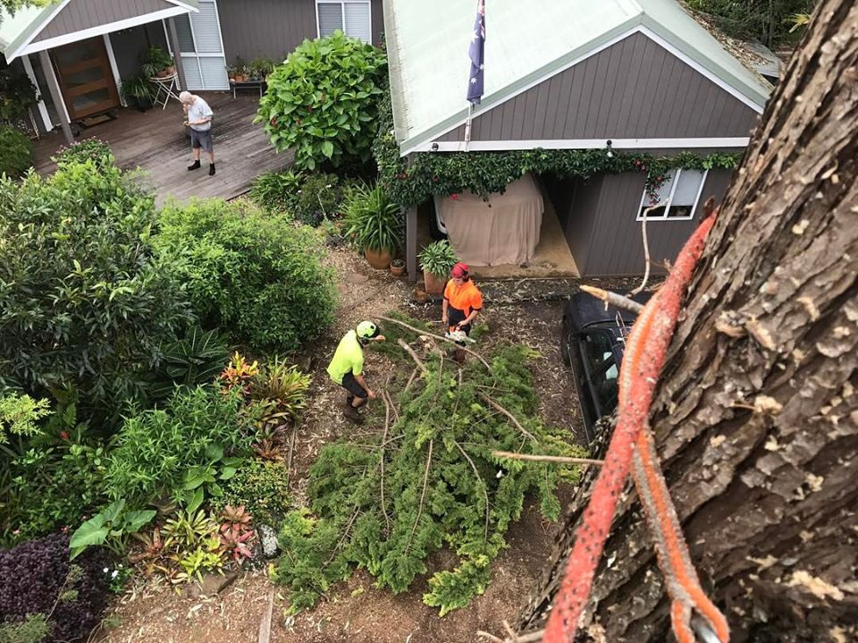 Sunshine Coast Tree Servicing