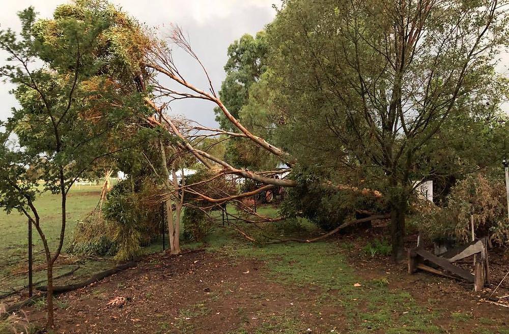 Maleny tree storm damage