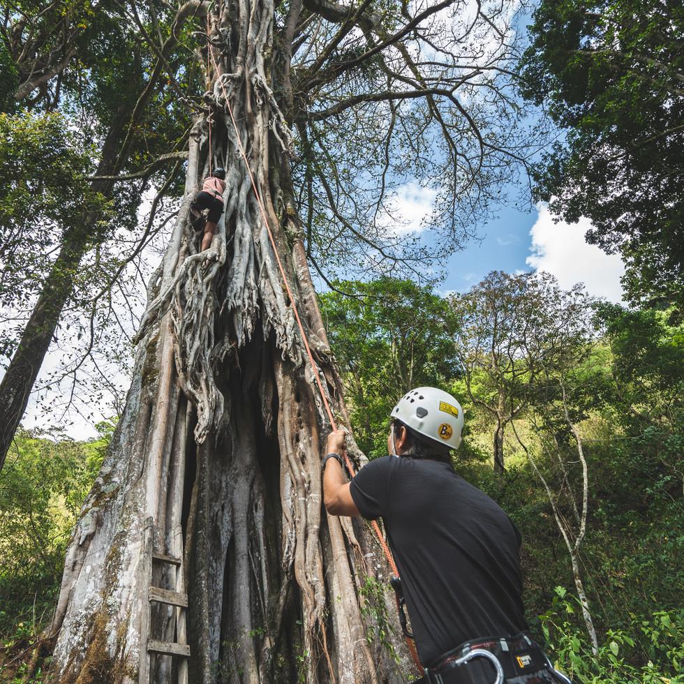 Tree Climbing at CHAKRA Retreat Center