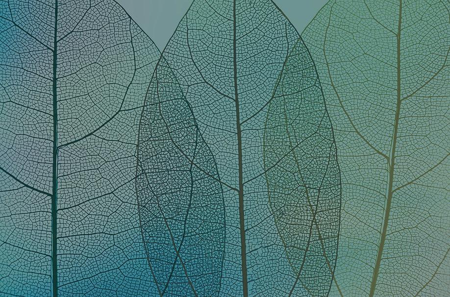 feuilles site.jpg
