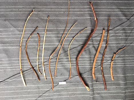 sequoia 10.jpeg