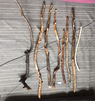 willow 3.jpeg