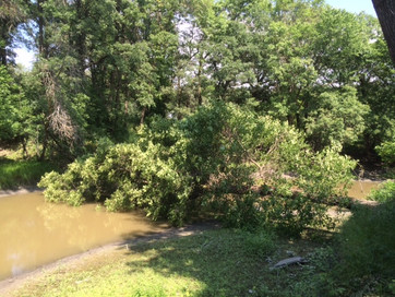 A fallen tree blocking the river from passage