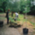 Tree Planting Thumb.JPG