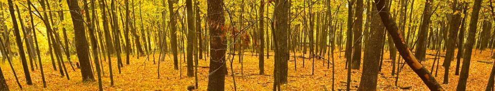 Fall Deep Forest.jpg