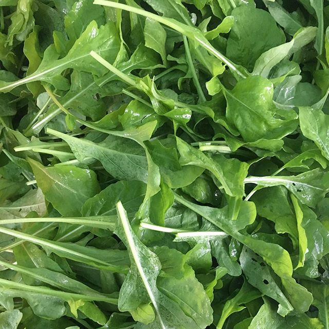 Come get your arugula today @plymouthfar