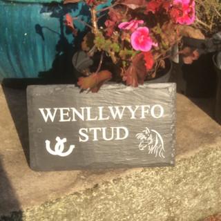 Wenllwyfo Stud