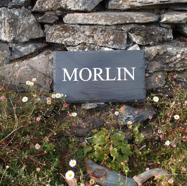 Morlin