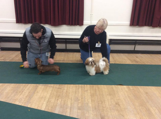 February 2019 Puppy Party Winners