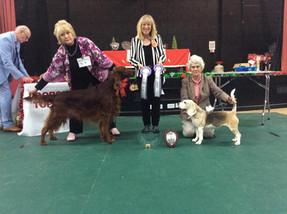 Dorset Tog Dog 2018 Vetern Winner and Reserve