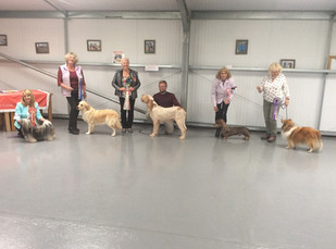 POOLE LIMIT SHOW 2019 BIS, RBIS, BP and