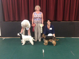 Poole Club June 2019 puppy match winners