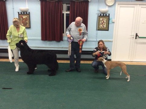 Poole 2018 Christmas Finals Puppy Winners