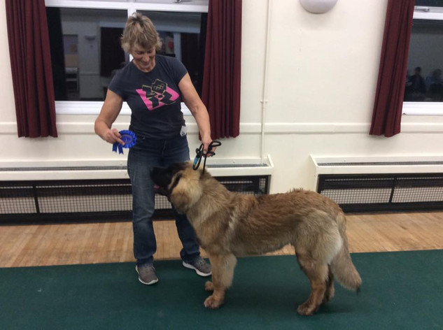 poole Match October 2019 puppy