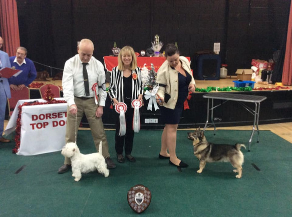 Dorset Top Dog 2018 Puppy Winner and Reserve