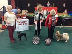 Dorset Top Dog 2018 winner and Reserve