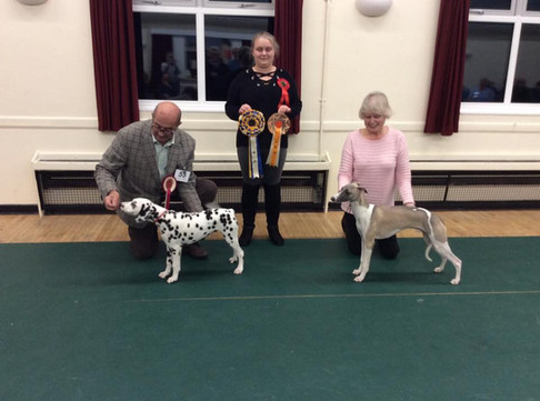 POOLE MATCH November puppy winners 2019