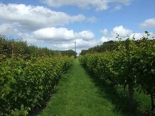 cwm-deri-vineyard.jpg