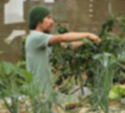 P3_Greenhouse & Organic Food Growing Ass