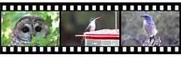 filmstrip2.jpg
