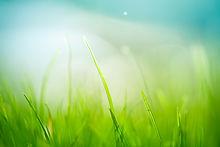 Grass HighRes.jpg