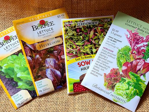 Easy Indoor Lettuce Seed Starting