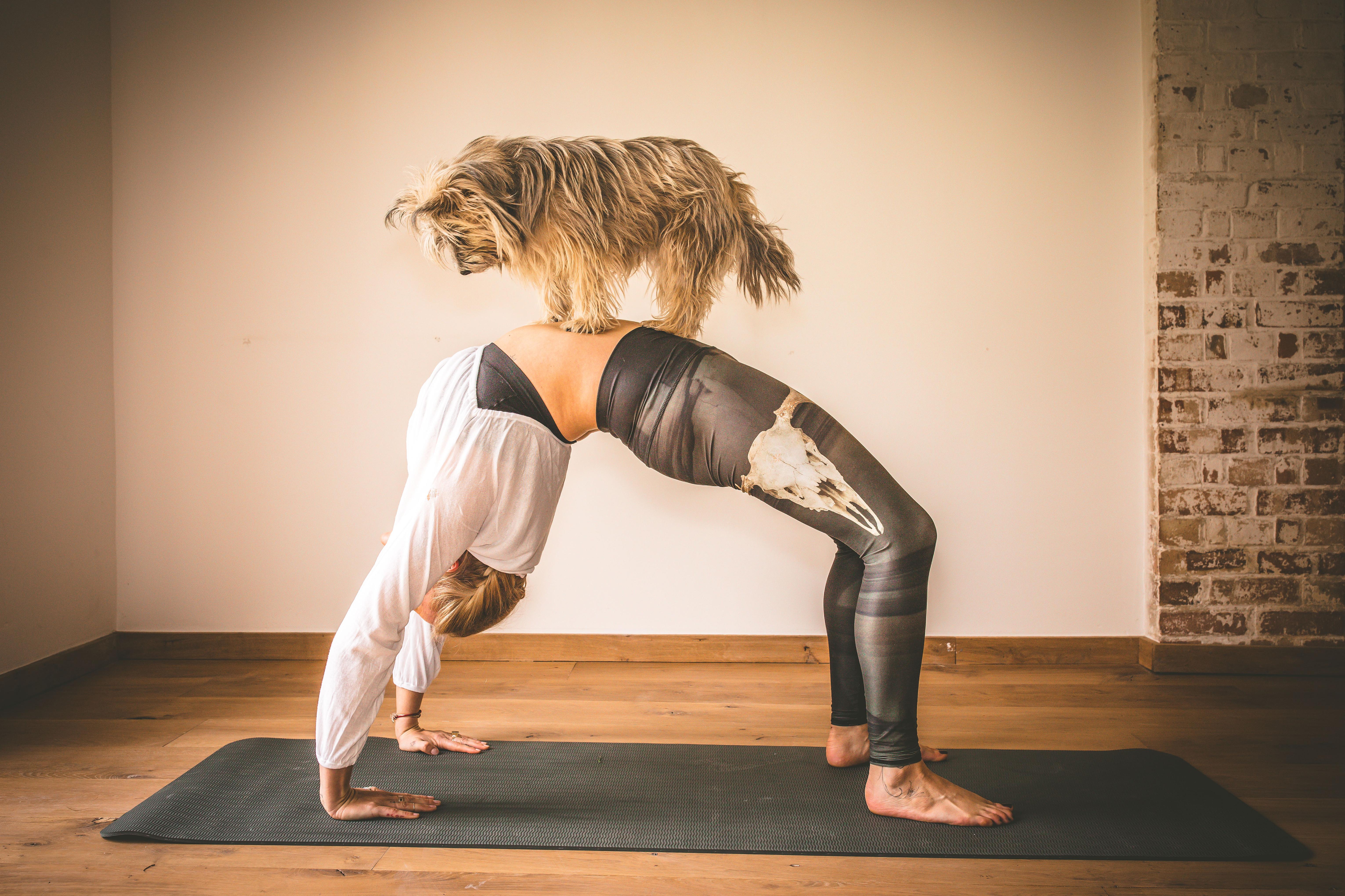 Yoga Flow Mello View