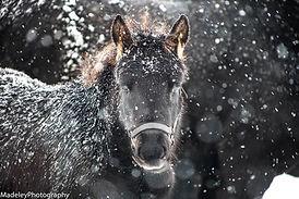 Ganache in the snow.jpg