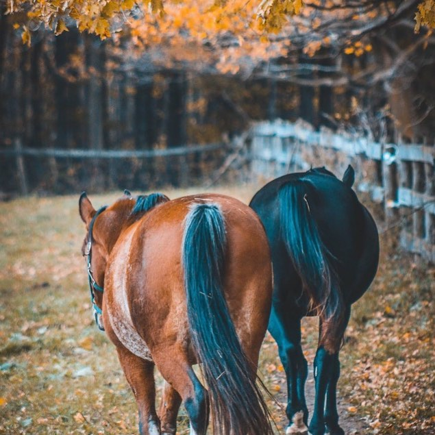 Horses by Mackenzie Madeley