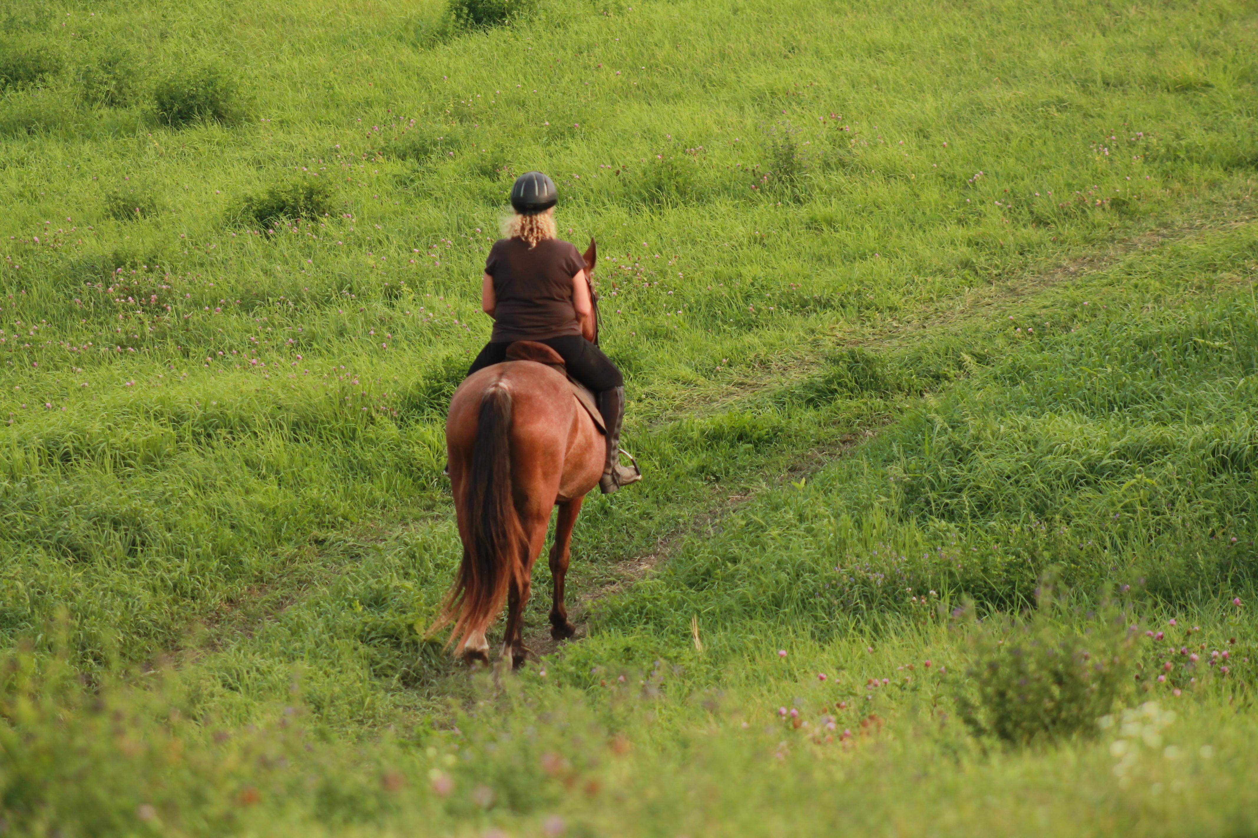 Hay Field Trail