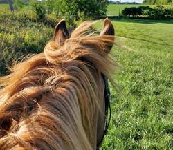 Hay Field Hacking