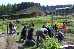 cours_potager_avril2017