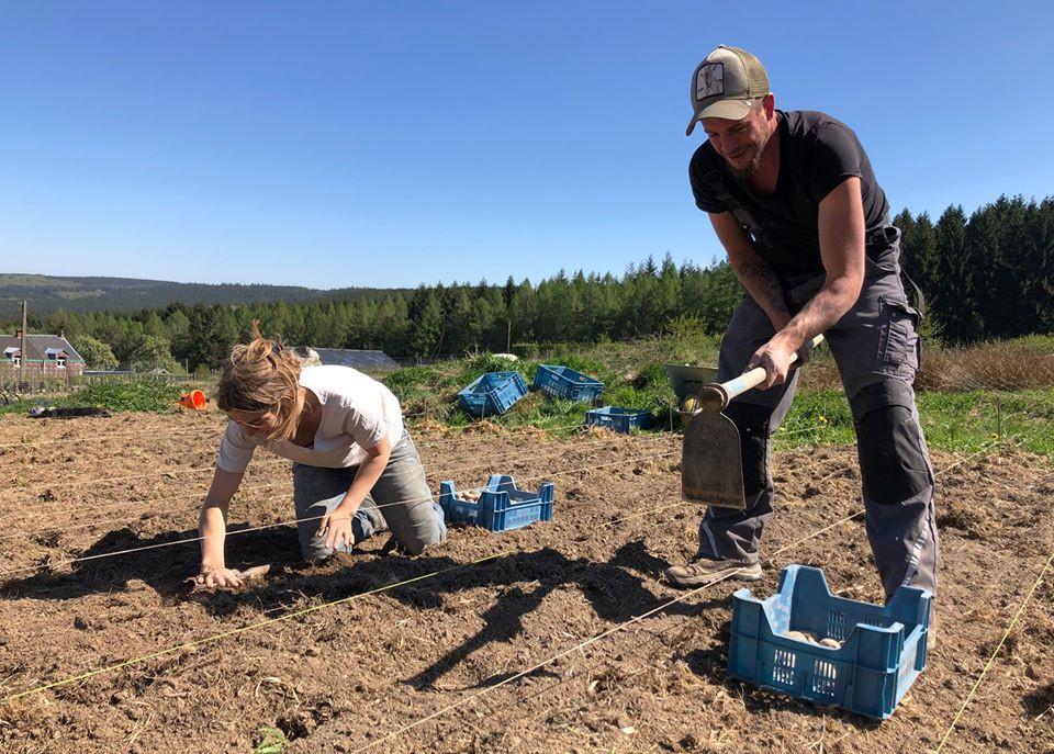 Alexis et Cécile en pleine plantation des pommes de terre